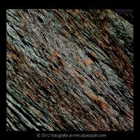img_678330-dicembre-2011-inverno-cop1